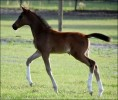 DSC 0710 Razipat Filly Web