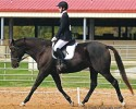 Tiny Clemson Show 2014 Dressage Web