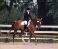 Vinnie Hawaii Dressage Cropped WEB