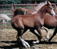 GOLD N RIO Weanling