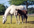Casino Anglo Filly 11 Days 1