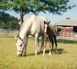 Casino Anglo Filly 11 Days 2