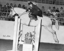 SheikSidesaddle