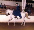 Silversidesaddle