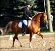 Gracie Dressage 2 Web